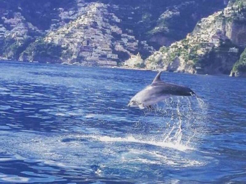 delfini in costiera amalfitana